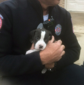 puppies saved with pet oxygen masks